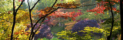 Trees In A Garden Butchart Gardens Art Print by Panoramic Images