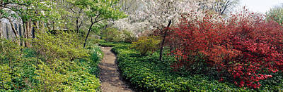 Maryland Photograph - Trees In A Garden, Garden Of Eden by Panoramic Images