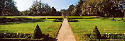 Trees In A Garden, Middleton Place Art Print by Panoramic Images