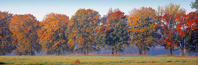 In A Row Photograph - Trees In A Garden, South Bohemia, Czech by Panoramic Images