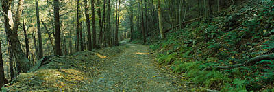 Lush Photograph - Trees In A National Park, Shenandoah by Panoramic Images