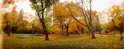 Public Park Photograph - Trees In A Park, Central Park by Panoramic Images