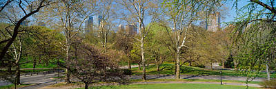 Central Park West Photograph - Trees In A Park, Central Park West by Panoramic Images