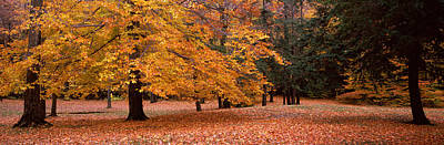 Fallen Leaf Photograph - Trees In A Park, Chestnut Ridge County by Panoramic Images