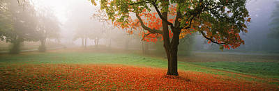 Fallen Leaf Photograph - Trees In A Park, Djurgarden, Stockholm by Panoramic Images