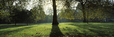 Fallen Leaf Photograph - Trees In A Park, St. Jamess Park by Panoramic Images