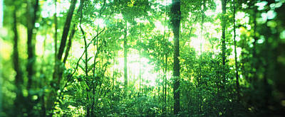 Abstract In Nature Photograph - Trees In A Rainforest, Arenal Region by Panoramic Images