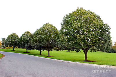 Photograph - Trees In A Row by Karen Adams