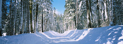 In A Row Photograph - Trees In A Row On Both Sides Of A Snow by Panoramic Images
