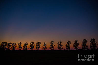 Photograph - Trees In A Row Sunset by Cheryl Baxter