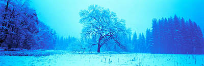 Bare Trees Photograph - Trees In A Snow Covered Landscape by Panoramic Images