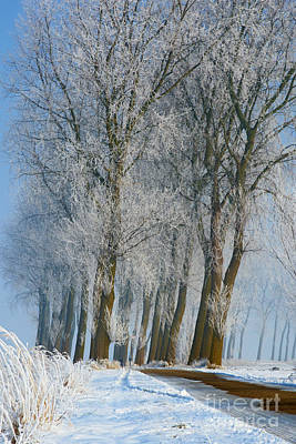 Photograph - Trees In A Snowy Environment by Nick  Biemans