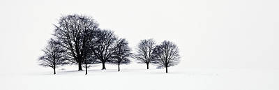 Trees In A Snowy Field In Chatsworth Art Print