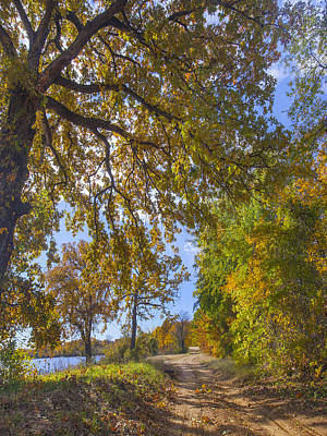 Dirt Roads Photograph - Trees In Autumn Along Lake Texas by Tim Fitzharris