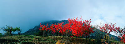 Scenic View In France Photograph - Trees In Autumn At Dusk by Panoramic Images