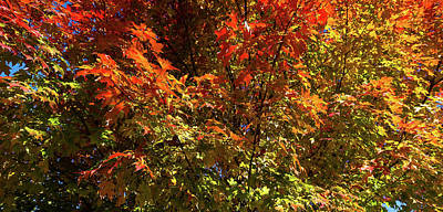 Maine Nature Photograph - Trees In Autumn, Bath, Sagadahoc by Panoramic Images