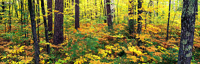 Ashland Photograph - Trees In Autumn, Copper Falls State by Panoramic Images