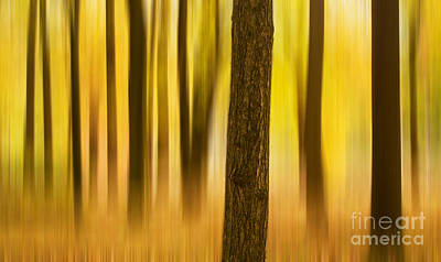 Trees In Autumn Forest Art Print