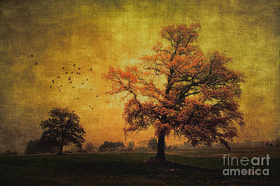 Photograph - Trees In Autumn by Jutta Maria Pusl