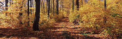 Fallen Leaf Photograph - Trees In Autumn, Stowe, Lamoille by Panoramic Images