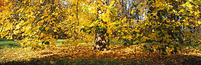 Fallen Leaf Photograph - Trees In Autumn, Stuttgart by Panoramic Images