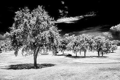 Photograph - Trees In Black And White by Lewis Mann