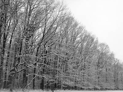 Photograph - Trees In Black And White by Michael Porchik