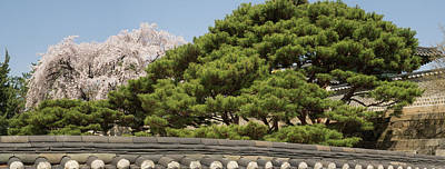Cherry Blossoms Photograph - Trees In Bloom At Changdeokgung Palace by Panoramic Images