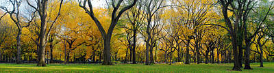 Art Print featuring the photograph Trees In Central Park by Yue Wang