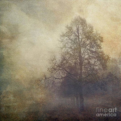 Licht Wall Art - Photograph - Trees In Fall Mist by Dirk Wuestenhagen