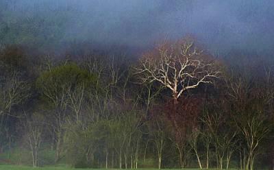 Trees In Fog 4 Art Print by Dena Kidd