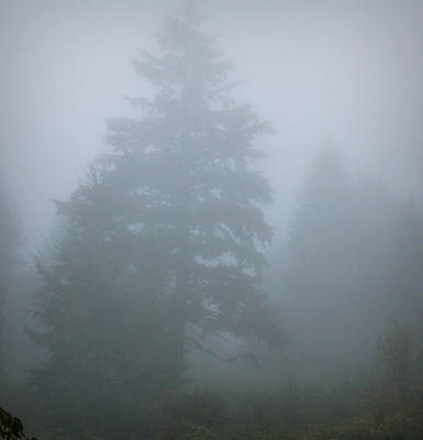 Photograph - Trees In Fog by Katie Wing Vigil