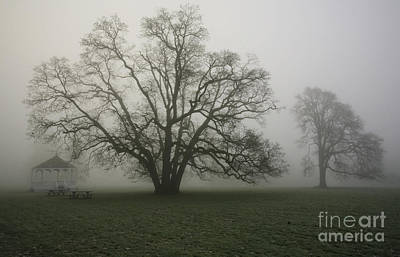 Trees In Fog Art Print by Rich Collins