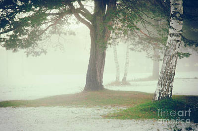 Print featuring the photograph Trees In Fog by Silvia Ganora