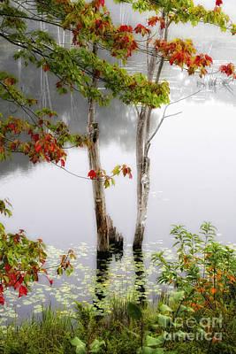 Trees In Fog Original by Timothy Hacker