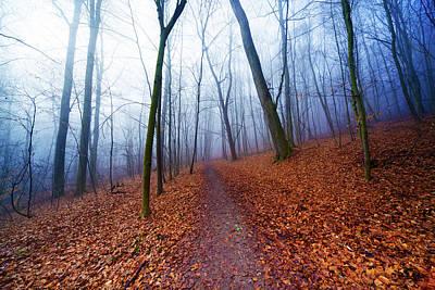 Autumn Leaf Photograph - Trees In Forest In Autumn by Wladimir Bulgar