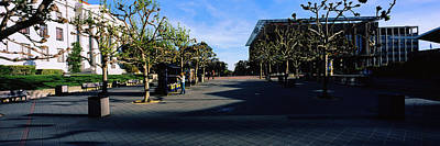 Photograph - Trees In Front Of A Campus, University by Panoramic Images