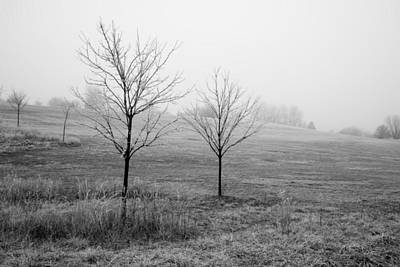 Photograph - Trees In Frost And Grey by Michael Flood