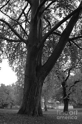 Photograph - Trees In Horten by Randi Grace Nilsberg