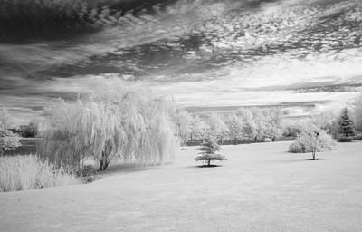 Photograph - Trees In Infrared by Guy Whiteley