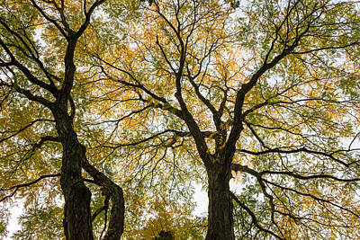 Photograph - Trees In Love by Ludmila Nayvelt
