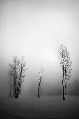 Trees In Mist Art Print by Davorin Mance
