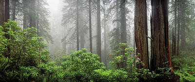 Trees In Misty Forest Art Print