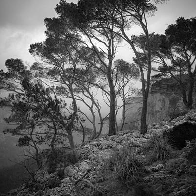 Photograph - Trees In Rain by Alexander Kunz