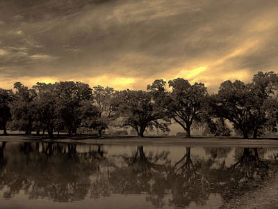 Photograph - Trees In Sepia by Leapdaybride