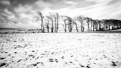 Trees In Snow Scotland Iv Art Print