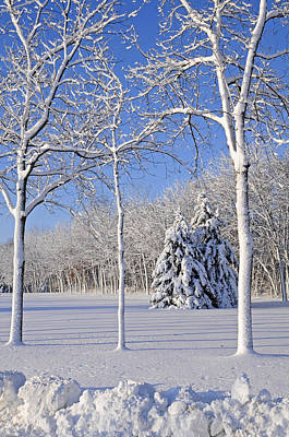 Trees In Snow  Wisconsin Art Print by Anonymous