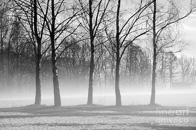 Photograph - Trees In Steam Fog by Randi Grace Nilsberg