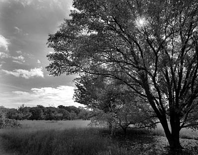 Photograph - Trees In Sunlight by Joseph G Holland