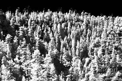 Photograph - Trees In The Canyon by John Rizzuto